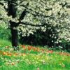 Jahreszeiten: Frühling